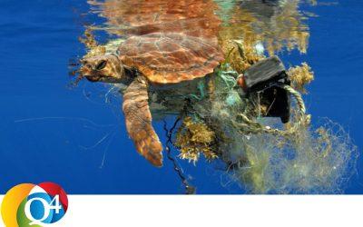 Q4 Clue 581 Wereld Oceanen Dag