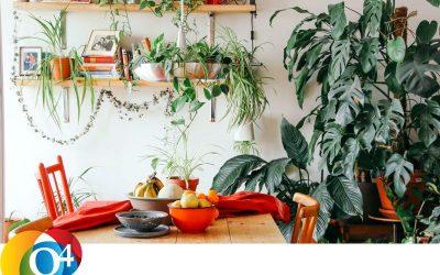 Q4 Clue 578 Wereld planten dag